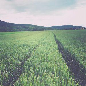 The field in Mössingen, Germany