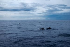 Dolphins in the ocean.