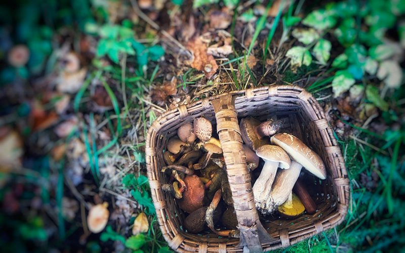 mushroom picking in Portugal